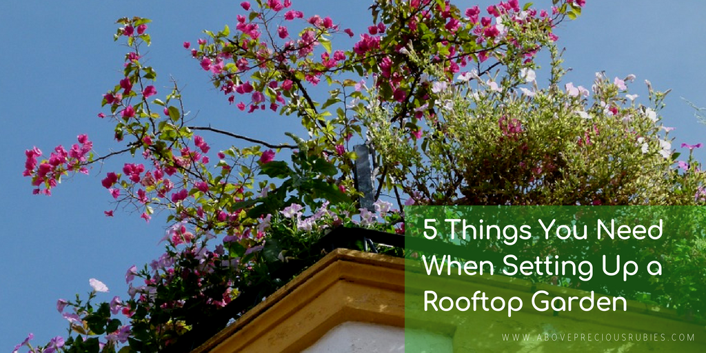 5 THINGS YOU NEED WHEN SETTING UP A ROOFTOP GARDEN